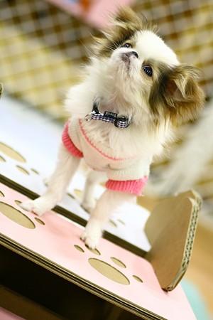Самые большие породы собак в мире с фото  топ 10