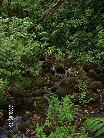 Akaka Falls 6