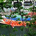Photos: 大岡川