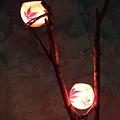 写真: 灯一輪