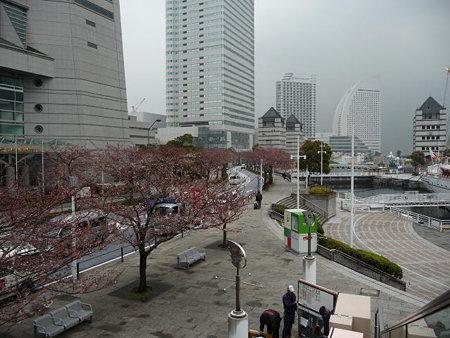 090401-MM21の桜 (3)