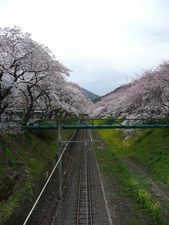 090405-御殿場線桜並木 (13)