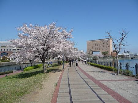 090409-MM21 汽車道と桜 (11)