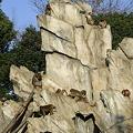 Photos: 早朝のサル山