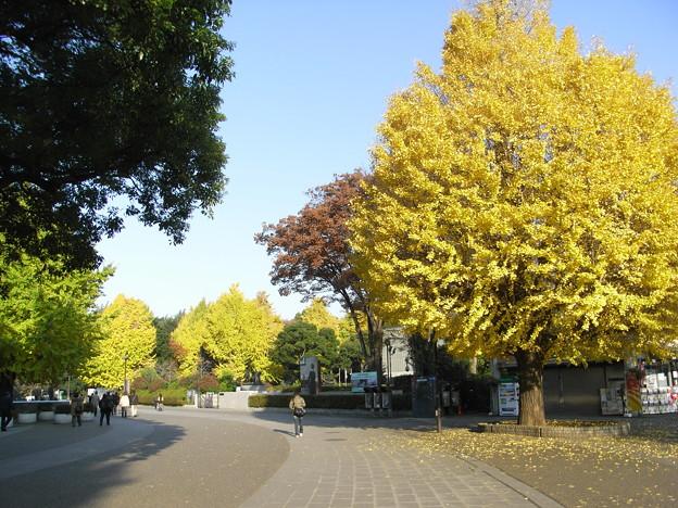 Photos: イチョウと上野公園