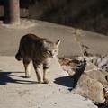 写真: 泉の森のノラ猫