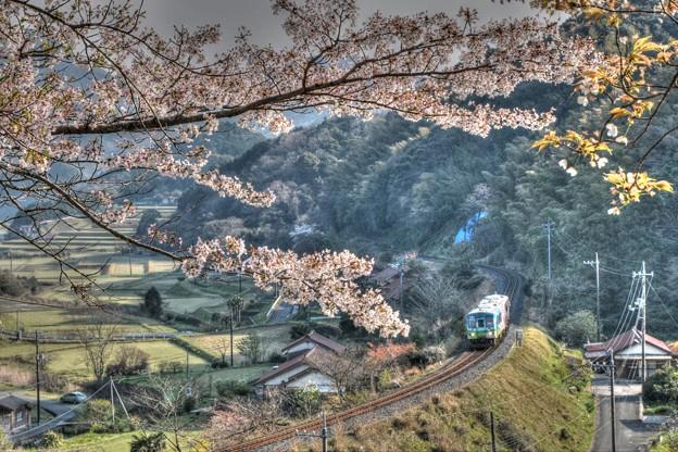 桜と列車と