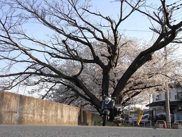 春の寄り道