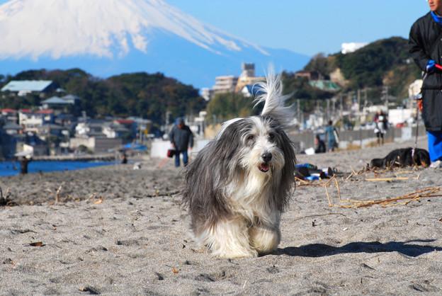 七里ヶ浜のセレブ犬
