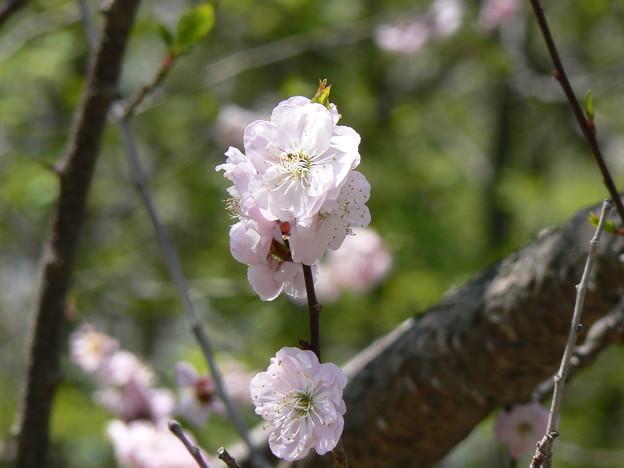 厚別区青葉中央公園P1010869
