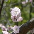 Photos: 厚別区青葉中央公園P1010869