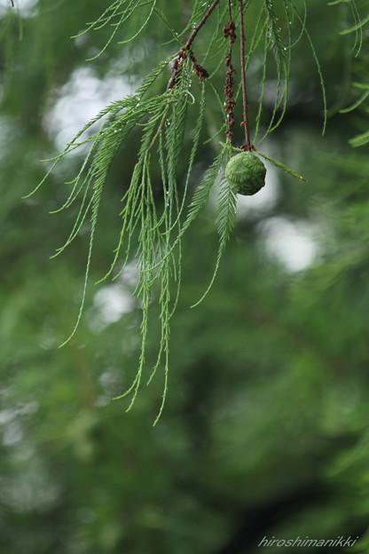 グリーン・ボール