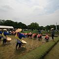 写真: 後楽園お田植え祭り4