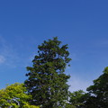 天空を目指す一本の木