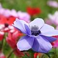 写真: 2009_0416_132117-P1020400