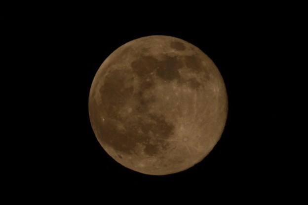満月でございま~す640mm