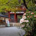 Photos: 石楠花のお寺