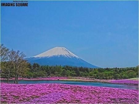 富士芝桜(HDRアートクラフト・弱)