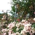 Photos: お庭が素敵なレストラン……(4)