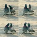 """Photos: To """"Kiss"""""""