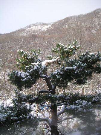 小樽旅亭 藏群 眺望(2)