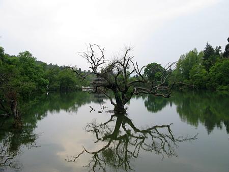 08.04.27 王泉公園 木