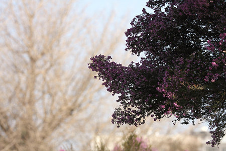 2009.02.14 イタリア山庭園 花