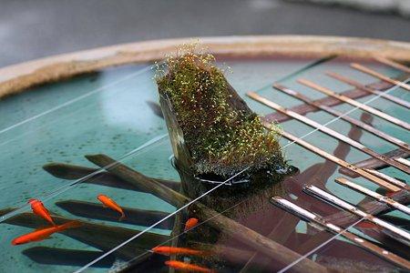 2009.03.07 報国寺 金魚鉢