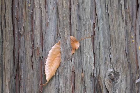 2014.07.03 瀬谷市民の森 檜のポスト