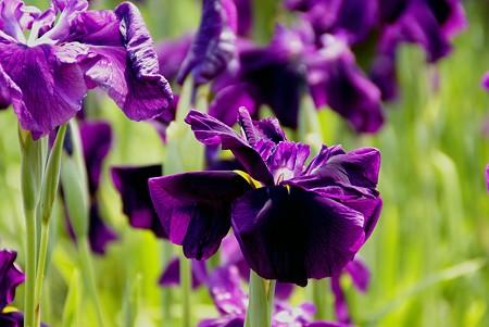 紫の存在感・・