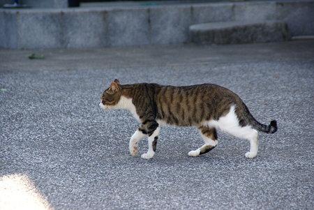 おさんぽ~♪ 漁港で愛されてる猫・・2