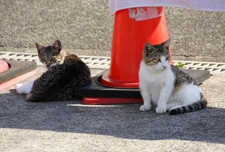 仔猫たち・・ 漁港で愛されてる猫・・4