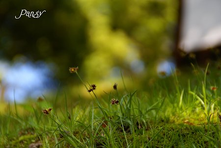 春の緑・・