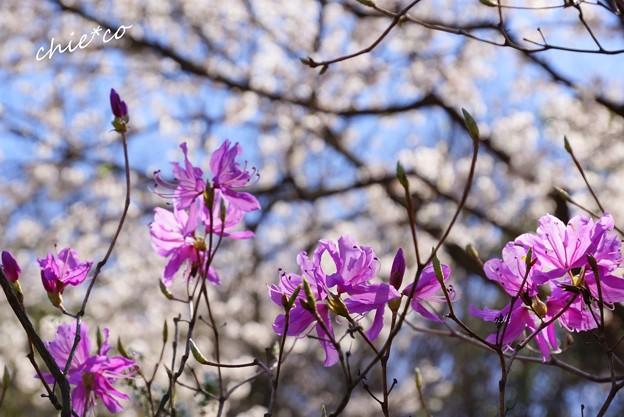 三渓園~春~-194