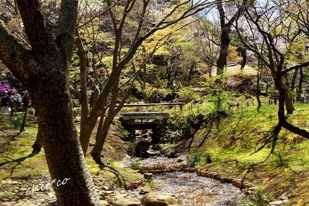 三渓園~春~-224