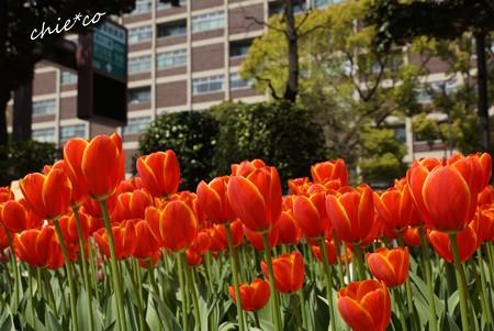 横浜公園-092