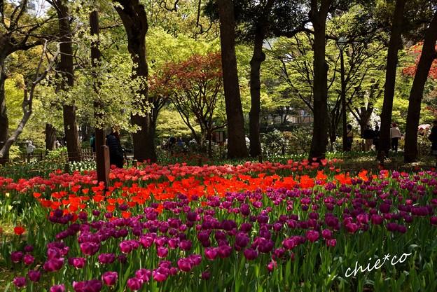 横浜公園-142