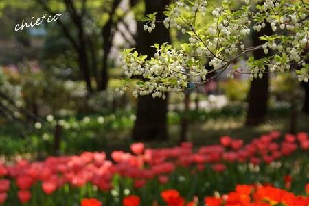 横浜公園-146