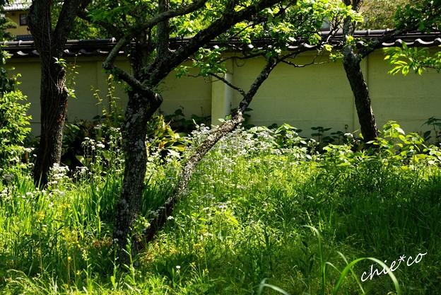 草の緑・・