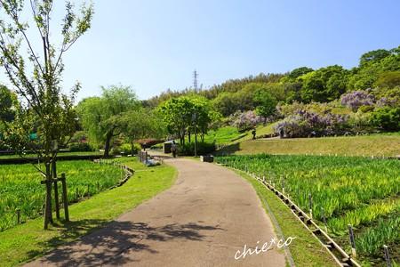 横須賀しょうぶ園-008