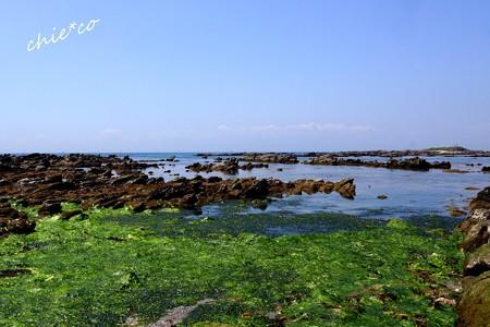 海藻と・・岩礁のうみ・・