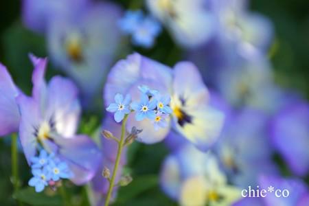 横浜 English Garden-035