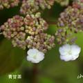 写真: 鎌倉長谷-240