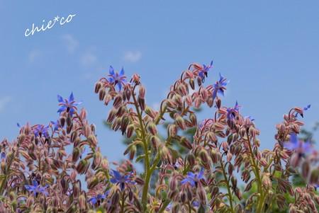 花菜ガーデン-145