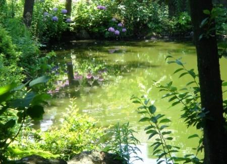 池に映る紫陽花・・・♪