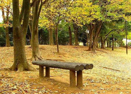 枯葉色に染まるベンチ・・・♪