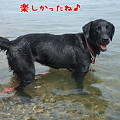 Photos: 花初泳ぎ7