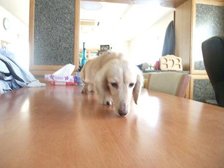 机の上に避難