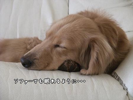 ソファーでも眠れるように…