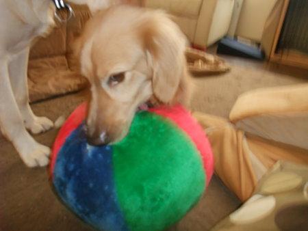やたらとこのボールが気に入り口に咥えっぱなし
